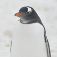 Antartika Fi